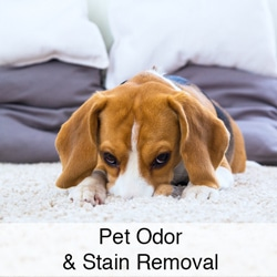 Pet stain and odor